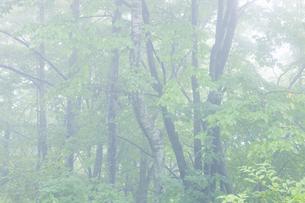 霧の写真素材 [FYI04126894]