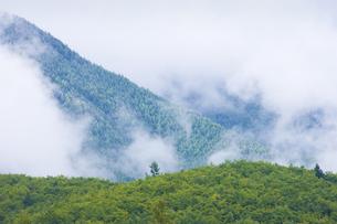雨上がりの山の写真素材 [FYI04126895]