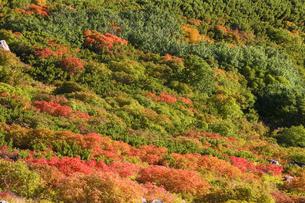 ナナカマド紅葉の写真素材 [FYI04126912]