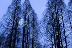 冬枯れの写真素材 [FYI04127423]