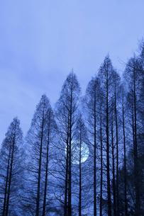 冬枯れの写真素材 [FYI04127424]