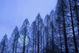 冬枯れの写真素材 [FYI04127425]