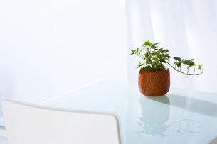 観葉植物の写真素材 [FYI04128463]