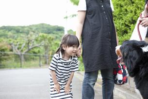 犬と遊ぶ女の子の写真素材 [FYI04128642]