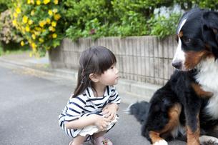 犬と遊ぶ女の子の写真素材 [FYI04128644]