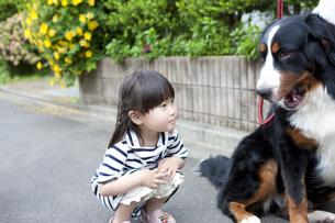 犬と遊ぶ女の子の写真素材 [FYI04128645]