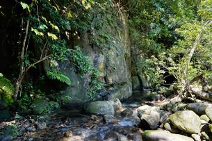 西表島のジャングルの写真素材 [FYI04129315]