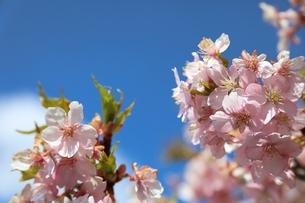 那須塩原道の駅の桜の写真素材 [FYI04129887]