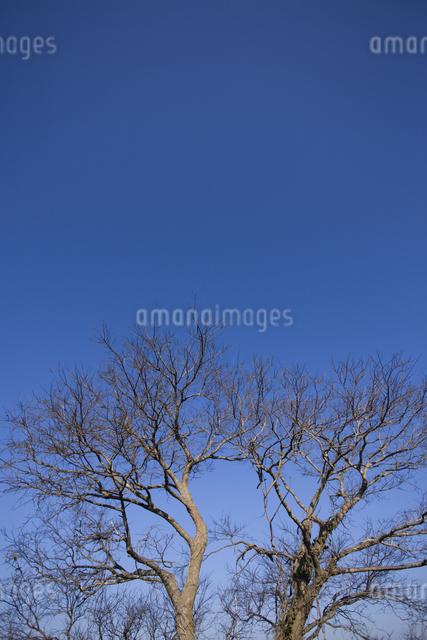 青空と樹木の写真素材 [FYI04130908]