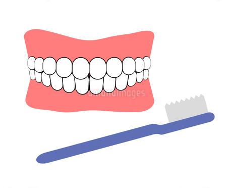 入れ歯と歯ブラシのイラスト素材 [FYI04131104]
