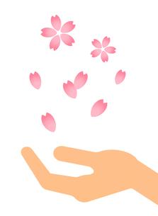 手の上に落ちる桜のイラスト素材 [FYI04131181]