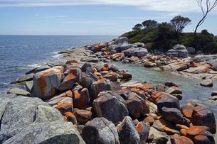 タスマニア州のセントへレンズ付近のベイオブファイヤーの赤い岩の写真素材 [FYI04131272]