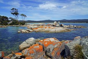 タスマニア州のセントへレンズ付近のベイオブファイヤーの赤い岩の写真素材 [FYI04131284]