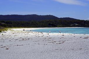 タスマニア州のセントへレンズ付近の白砂の海岸の写真素材 [FYI04131288]
