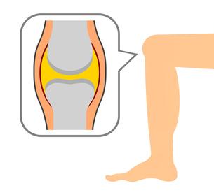膝関節の図のイラスト素材 [FYI04131375]
