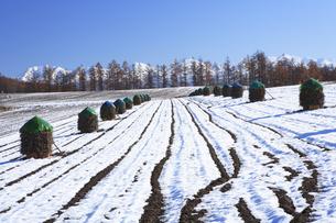 雪の田園風景の写真素材 [FYI04131471]