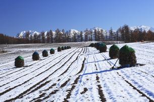 雪の田園風景の写真素材 [FYI04131472]