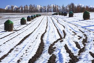 雪の田園風景の写真素材 [FYI04131474]