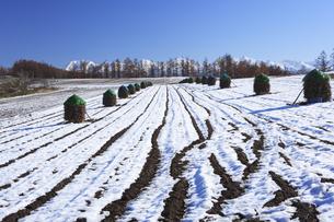 雪の田園風景の写真素材 [FYI04131476]
