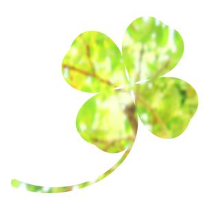 クローバーに映る新緑のイラスト素材 [FYI04131553]
