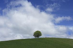 一本の木と雲の写真素材 [FYI04131632]