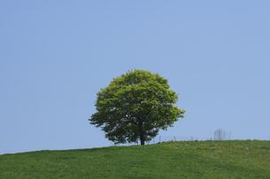 丘の一本の木の写真素材 [FYI04131637]