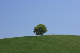 丘の一本の木の写真素材 [FYI04131638]