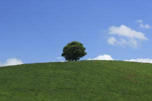 丘の一本の木の写真素材 [FYI04131645]