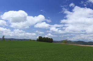 青麦畑と雲の写真素材 [FYI04131650]