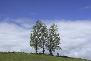 三本の木の写真素材 [FYI04131701]
