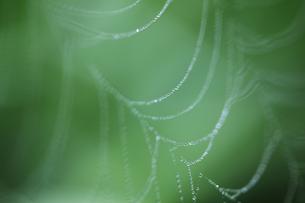 クモの巣の写真素材 [FYI04131996]