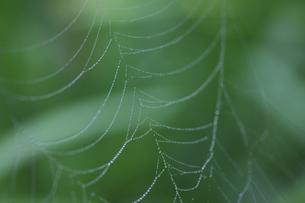 クモの巣の写真素材 [FYI04131998]