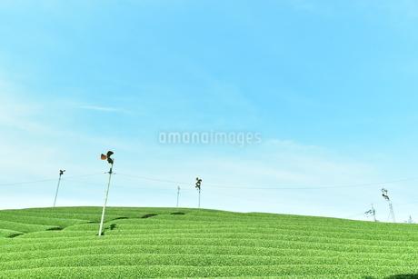 茶畑と青空の写真素材 [FYI04132518]