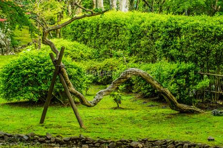 ユニークな姿の木の写真素材 [FYI04132716]
