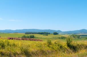 のどかな草原の風景の写真素材 [FYI04132724]