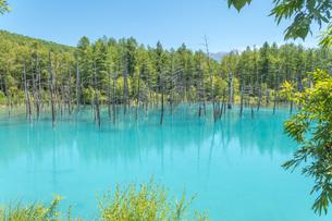 北海道美瑛町の青い池の写真素材 [FYI04132726]