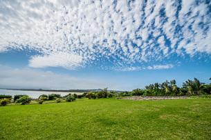 芝生の上に鱗雲の写真素材 [FYI04132733]