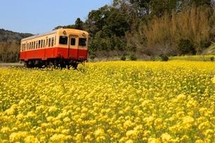 菜の花 鉄道の写真素材 [FYI04133113]