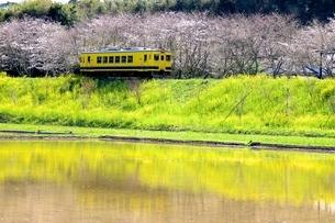 春、桜、鉄道の写真素材 [FYI04133114]