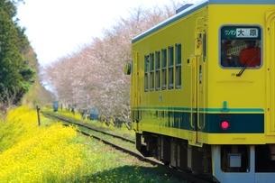 春、桜、菜の花、鉄道の写真素材 [FYI04133117]