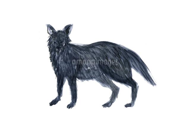 オオカミのイラスト素材 [FYI04133248]