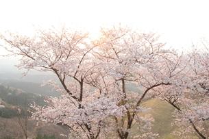 桜景色の写真素材 [FYI04134414]