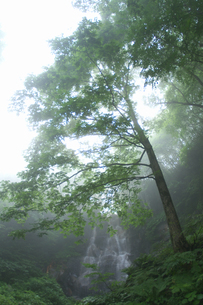 幻の滝の写真素材 [FYI04134616]