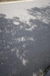 2009年7月22日,,,日食の木漏れ日の写真素材 [FYI04135073]