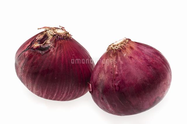 紫玉ねぎの写真素材 [FYI04135310]