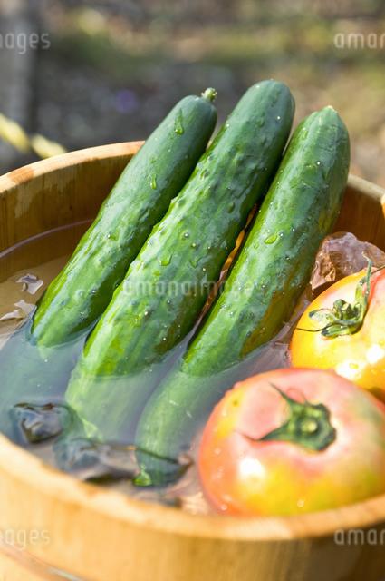 夏野菜の写真素材 [FYI04135431]