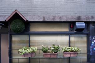 鉢植えのある壁の写真素材 [FYI04135441]