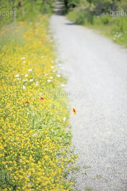 花咲く小径の写真素材 [FYI04135510]