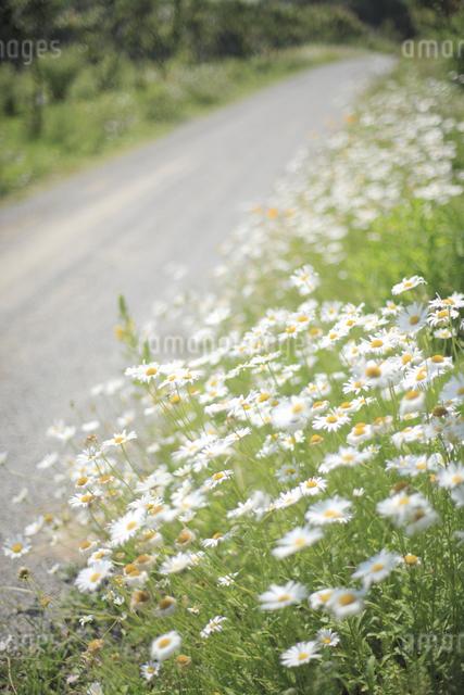 花咲く小径の写真素材 [FYI04135512]