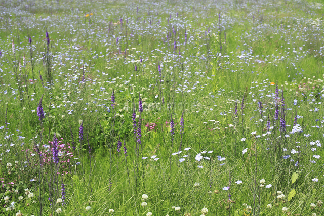 花咲く草原の写真素材 [FYI04135518]